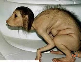 Photo of حقيقة الفتاة التي مسخت وتحولت الى حيوان